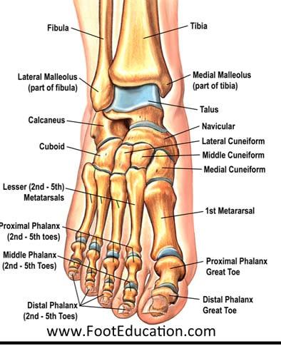 เท้ามีกระดูกงอก
