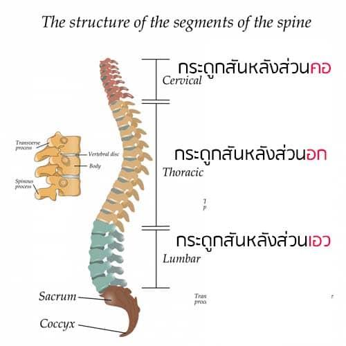 กระดูกสันหลังส่วนต่างๆ